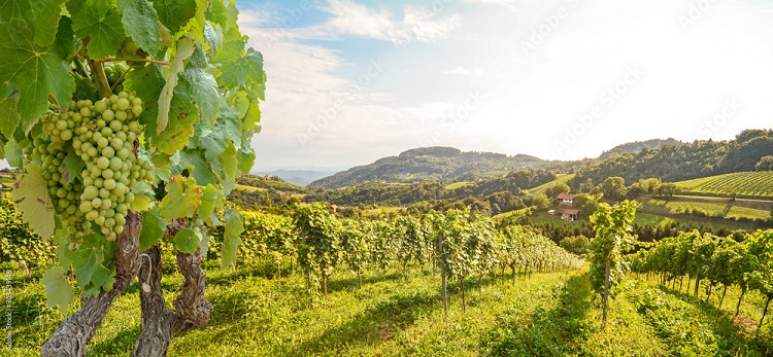Weinbau Wachau